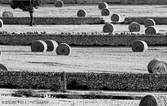 linee e cerchi (Adriano Perla) Tags: blackandwhite bw blancoynegro photoshop canon landscape eos blackwhite bn campagna balla perla puglia adriano paesaggio biancoenero lightroom turi putignano balle apulia tamron70300 balledifieno coltivazione 60d balladifieno