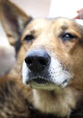perrito triste (barnigomez) Tags: dog argentina retrato perro rosario doggie mascota perrito funes canon5dmarkii