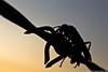 A vespa,  a cerca, o entardecer (Junior AmoJr) Tags: street color art sol arquitetura brasil photoshop canon sãopaulo chuva pb images paisagem junior getty cor snapfish gettyimages lightroom t3i atibaia photostreet itsnoon gettyimagesandtheflickrcollection gettyimagesbrazil amojr junioramojr crowdart oliveirajunior riafestival