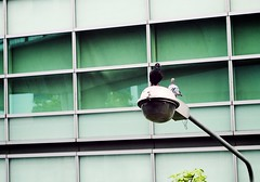 Black & White Birds (norsez) Tags: street bird lens thailand 50mm aperture raw fuji bangkok f14 x thai dxo fujifilm fujinon xf cmos xp1 fastlens apsc fujix xpro1 xtrans thaiphotographer xmount fujixpro1 fujifilmxpro1