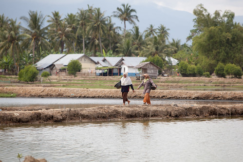 Women walk along reconstructed fish ponds, Bireuen, Indonesia. Photo by Mike Lusmore/Duckrabbit, 2012