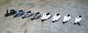 1:87 scale Vespa Scooters (Casting) 香港微型藝術 情景模型 (AC Studio) Tags: scale bike bay miniature model vespa garage scooter hong kong workshop motorcycle ho 香港 187 making diorama causeway cwb 創作 176 模型 文化 展覽 情景 藝術 微型 展品 微型藝術 香港情景模型 香港微型藝術