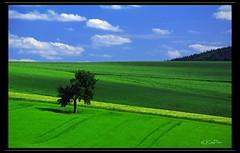June (Lutz Koch) Tags: blue summer sky tree green june juni germany landscape deutschland hessen farm sommer farming landwirtschaft himmel grn blau landschaft taunus baum acker hesse idstein nassa flickrdiamond idsteinerland pentaxk7 elkaypics nassauerland