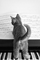 """ diesis!"" (brescia, italy) (bloodybee) Tags: bw music pet playing cat keys kitten keyboard feline play tabby piano kitty explore jura instrument musicalinstrument sheetmusic tabbycat pianoforte solfeggio"