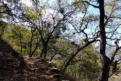 el sendero (b3co) Tags: naturaleza mountain mexico waterfall queretaro montaa rappel vacaciones b3co cascada sierragorda trecking qro sierraaventura