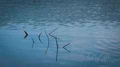 Sticks (Ledbylight Photography) Tags: ca blue lake abstract water sticks ripples burney ledbylight