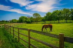 Mudchute Farm, London, United Kingdom (Syed Ali Warda) Tags: wild england sky horse green london field canon landscape landscapes cityscape unitedkingdom outdoor farm greenwich bluesky mudchutefarm canon7d syedaliwarda