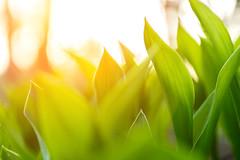 Summer is coming! (Kahvilalli) Tags: light sunset summer nature grass digital suomi finland nikon warm time nikkor f28 laukaa 1755mm kuusaa d3100
