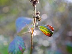 Colors (classcamelia) Tags: world100f spiritofphotography