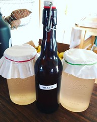 Make Water Kefir Without Starter Grains... (Mikey Sklar & Wendy Tremayne) Tags: vegan lowcarb bacteria fermentation probiotic antiinflammatory antidepressent waterkefir guthealth uploaded:by=flickstagram instagram:photo=1149504247301095291804953022 gutbrain