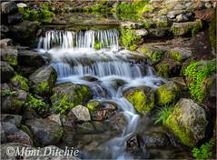 Fern Creek (Mimi Ditchie) Tags: creek yosemite getty yosemitenationalpark gettyimages ferncreek mimiditchie mimiditchiephotography yosemite2016