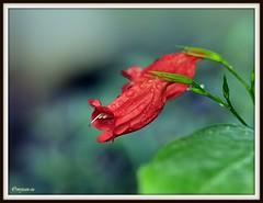_JVA6528 (mrjean.eu) Tags: flowers trees roses plants france flower colour cute nature public fleur smart fleurs nice animation botanic lovely elegant lorraine botanique parc couleur metz plantes classy espacevert