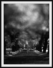 garden walk (Andrew C Wallace) Tags: longexposure blackandwhite bw blur lensbaby walking ir dof path australia victoria infrared shallowdof carltongardens tiltshift nd400 exhibitionbuildings nikon50mmf14 nd110 tilttransformer olympusomdem5