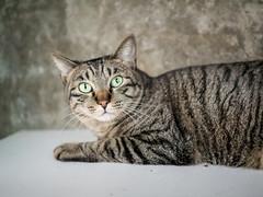 P4085817 (daisuke1230) Tags: cat olympus neko em  m43