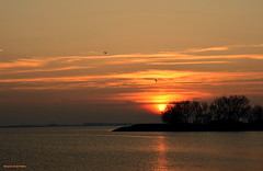Silhouettes by sunset (Mariannevanderwesten) Tags: nature zonsondergang nikon silhouettes natuur