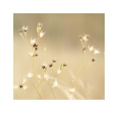 (mgarcacalvo) Tags: naturaleza nature tamron90mm