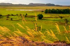 Golden Grasses (danielacon15) Tags: sunset green nature beautiful grass rock landscape outdoors golden countryside open image nt australia northernterritory ubirr floodplains