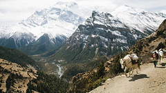 Upper Pisang, Annapurna, Nepal (Ryan Verissimo) Tags: nepal mountain trekking trek outdoors hiking adventure annapurna himalayas ryanverissimo