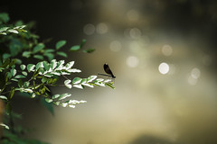 damsel fly (donaldogle1976) Tags: summer green water bug insect bokeh damselfly