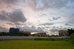 2016-07-07 18.58.18 (pang yu liu) Tags: 2016 07 jul   pate  typhoon  dusk farm