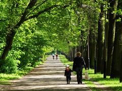sun in the city! (JoannaRB2009) Tags: park city trees light shadow people urban sun green sunshine walking alley path poland polska sunny avenue walkers lodz d parkzdrowie sonydschx100v