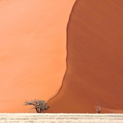 Life is always a struggle against mighty forces (adour garonne) Tags: life africa tree arbol sand desert dune sable arena vida desierto sesriem namibia arbre vie afrique dsert sossusvlei namib namibie dune45 namibnaukluft bestcapturesaoi elitegalleryaoi