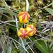 Flora del Parque Nacional Cajas