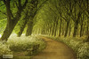 a seat not taken (larsvandegoor.com) Tags: flowers trees holland tree wow bench spring path cowparsley allxpressus