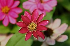 Amazing Flower Blossom