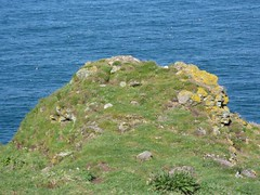 RSPB Fowlsheugh Nature Reserve south of Stonehaven, Aberdeenshire (iainh124a) Tags: uk summer cliff lumix coast scotland aberdeenshire nest walk gulls panasonic aberdeen puffin seabirds nesting stonehaven crawton tz7 dmczs3 iainh124a dmctz7 zs3 royalsocietyprotectionbirds