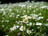 Blumenwiese 01.06.2012