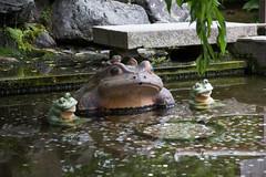 IMG_7975 (Christian Kaden) Tags: animal arashiyama frosch japan kansai kioto kyoto tempel tempelundschreine temple templeandshrines tenryuji tier tiere frog