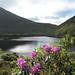 Bay Lough Blooms