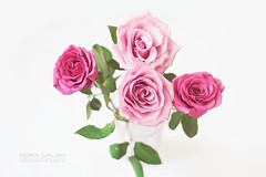 (Nora saleh) Tags: pink flowers roses white rose flickr rosa gl 2012       wwwflickrcom