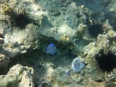 7d. Puerto Plata (diane_thomas22) Tags: underwater dominicanrepublic samsung snorkeling caribbean puertoplata barcelo playadorada