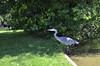 Graureiher (ponte1112) Tags: bird animal schweiz switzerland nikon che zürich vogel reiher nikonshooter uster nikoncapturenx d5100 nikkor35mm118