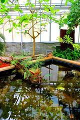 Glass House (Wanderlust_73) Tags: plants australia canberra botanicalgarden glasshouse australiannationalbotanicgardens uploaded:by=flickrmobile flickriosapp:filter=nofilter localscan