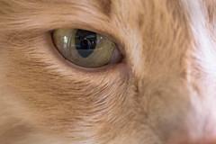 self portrait (enlarge for best results) (petespande) Tags: macro closeup nikon longhair macros cateye sigma105mm28 nikond750