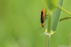 DN9A8680 (Josette Veltman) Tags: macro nature canon bug natuur bugs photowalk lente zwolle landschap insecten ivn westerveldsebos photowalkzwolle