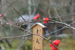 Pourpre (lilasyuri) Tags: voyage trip flowers winter light flower colour nature fleur colors beauty japan asian japanese daylight asia moments colours natural blossom hiver natur journey memory asie moment printemps japon japonais