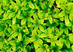 Green green (dayonkaede) Tags: leica green olympus summilux dg em1 25f14