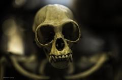 Dead Zoo (Stephen-Hotratz-Long) Tags: dublin museum skeleton skull naturalhistory monkeys deadzoo