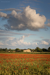 Cumulus (Sarah_Brooks) Tags: cloud field rural farm fluffy somerset cumulus poppy poppies fluffycloud