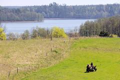 5764   Romantische Seenlandschaft in Masuren / Polen - Pferdefuhrwerk auf der Weide. (stadt + land) Tags: weide wiese polen pferd masuren wagen ehemaliges romantisch pferdefuhrwerk ursprnglich seenlandschaft woiwodschaft ostpreusen