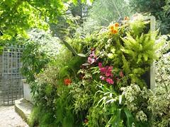 Giardino delle Rose (Aeryn ICamaleonte) Tags: italy rose florence italia tuscany firenze toscana michelangelo piazzale giardino