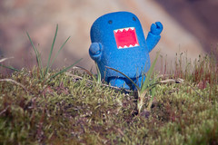 Domo Life: Lurking the Springful Wonders. (Simply Angle) Tags: macro grass closeup spring fuzzy sony sunny mount domo om domokun 80200mm 145 kitstar domonation nex3
