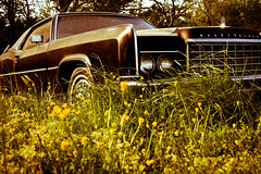 somebody to be your buttercup (TW Collins) Tags: vintage virginia rusty continental headlights chrome lincoln americana wildflowers redoak buttercups route15 roadslesstraveled