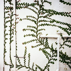 green wall* (miki**) Tags: white green 120 wall okinawa    rolleiflex35f urazoe