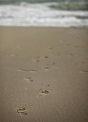 Footsteps (micheylal2) Tags: ocean sea usa nc sand waves shoreline footprints northcarolina windy stormy oceanside toyota footsteps shores outerbanks corolla stepbystep severeweather iwillfollow sandline