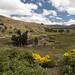 Il bel paesaggio verso Zumbahua